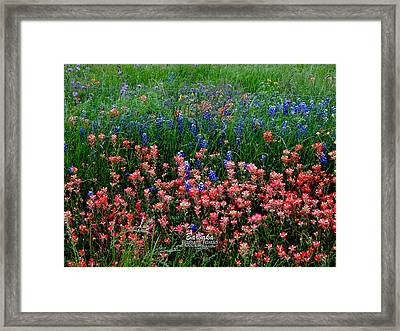 Framed Print featuring the photograph Indian Paintbrush #0486 by Barbara Tristan
