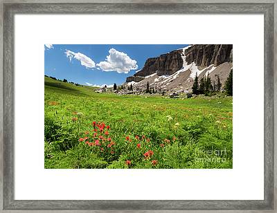 Indian Paintbrush And Cowparsnip Framed Print