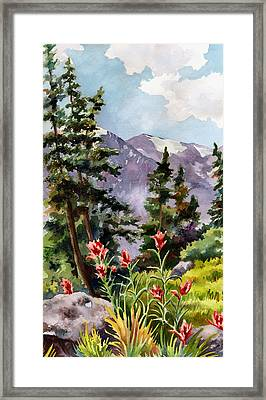 Indian Paintbrush Framed Print by Anne Gifford