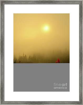 Indian Paintbrush Dawning Framed Print
