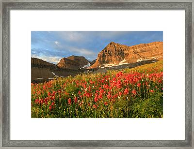 Indian Paintbrush On Timpanogos. Framed Print