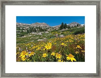 Framed Print featuring the photograph Indian Peaks Summer Wildflowers by Cascade Colors