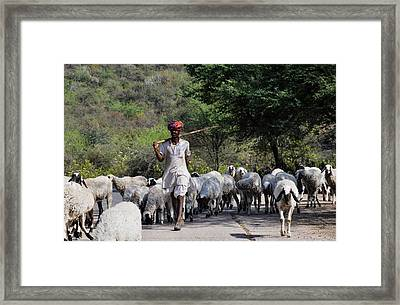 Indian Shepherd Framed Print by Freepassenger By Ozzy CG