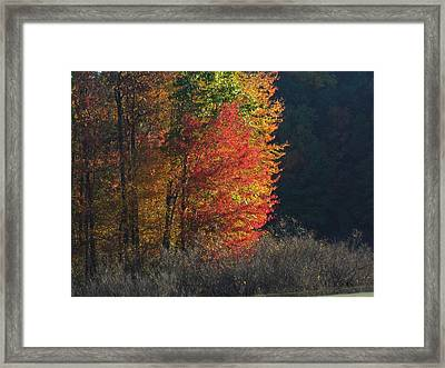 Indiana Colors Framed Print by Michael L Kimble