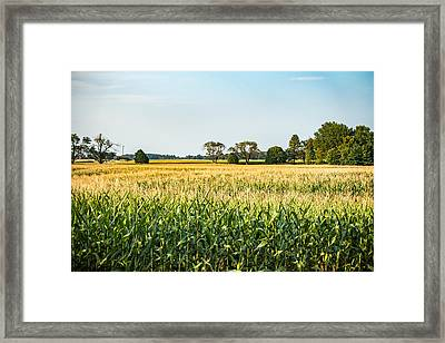 Indiana Corn Field Framed Print