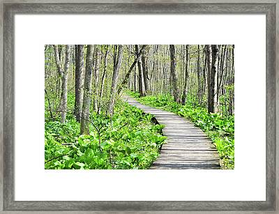 Indiana Dunes Great Green Marsh Boardwalk Framed Print