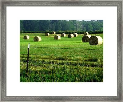 Indiana Hay Framed Print