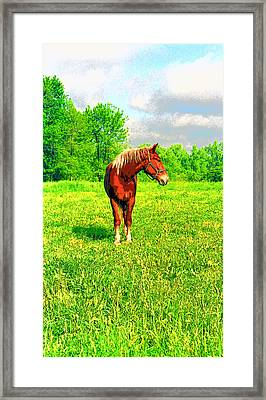 Indiana Horse Image Framed Print by Paul Price