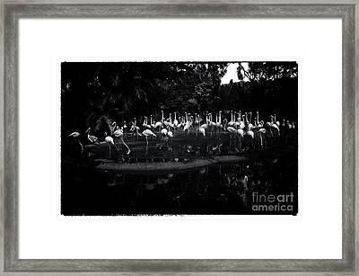 indifferent Bird Park Singapore Framed Print