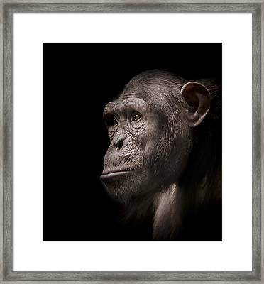Indignant Framed Print by Paul Neville