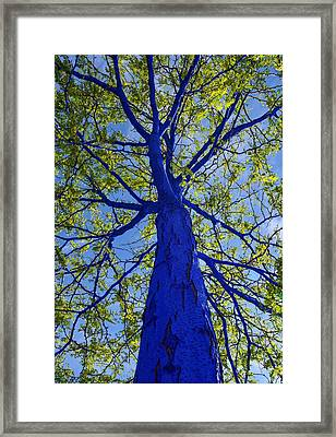 Indigo Tree Framed Print
