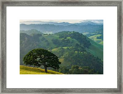Individuality Framed Print by Marc Crumpler