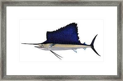 Indo Pacific Saifish Framed Print