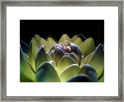 Indonesian White Lotus Framed Print