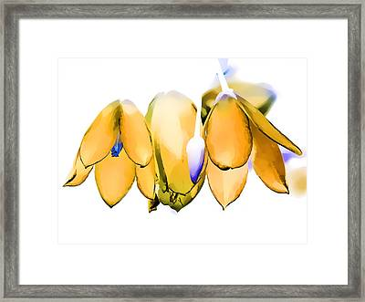 Inflorescence I Framed Print by Gareth Davies