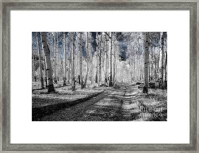 Infrared Aspens Framed Print