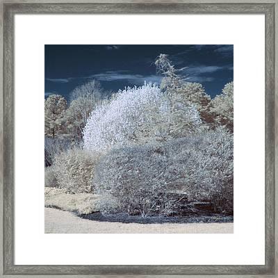 Infrared Bushes Framed Print by Paulette B Wright