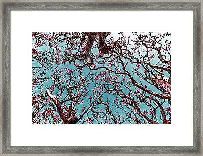 Infrared Frangipani Tree Framed Print