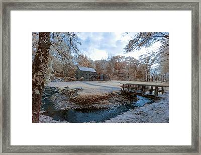 Infrared In The Fall Framed Print by Brian Hale
