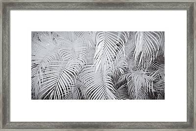Infrared Palm Abstract Framed Print