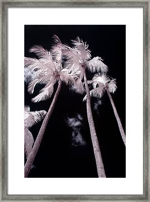 Infrared Palm Trees Framed Print by Adam Romanowicz