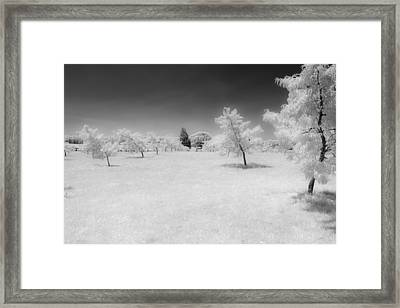 Infrared Peach Orchard Framed Print