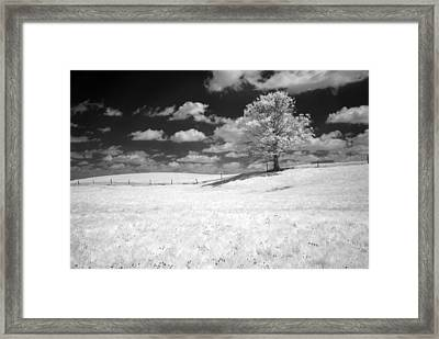 Infrared Tree Framed Print