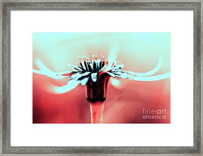 Infrared Wildflower Framed Print by Stelios Kleanthous