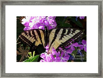 Framed Print featuring the photograph Injured Swallowtail by Erica Hanel