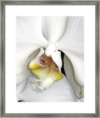 Inner Angel Framed Print by Mindy Newman