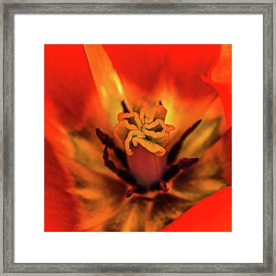 Inner Floral Macro Abstract Framed Print