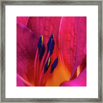 Inner Lily Macro  Framed Print by Julie Palencia
