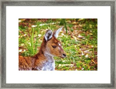Framed Print featuring the photograph Inner Peace, Yanchep National Park by Dave Catley