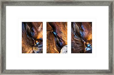 Framed Print featuring the photograph Inner Worlds - Collage by Alexander Kunz