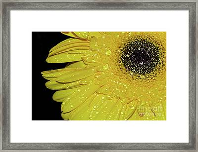 Framed Print featuring the photograph Innocence By Kaye Menner by Kaye Menner