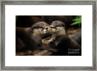 Innocence Framed Print by Kym Clarke