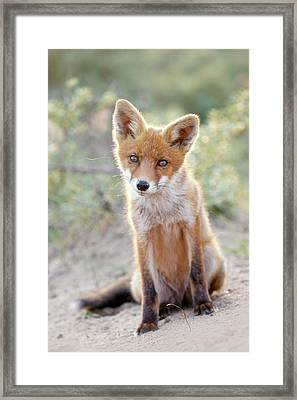 Innocence - Young Fox Kit Framed Print