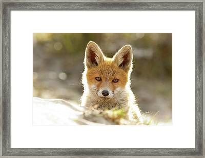 Innocent Eyes - Young Fox Kit Framed Print