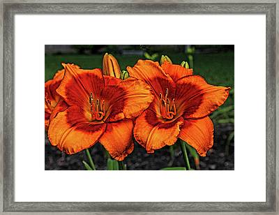 Framed Print featuring the photograph Innocent Fire by Judy Vincent
