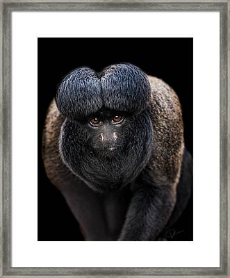 Inquisitive  Framed Print by Paul Neville