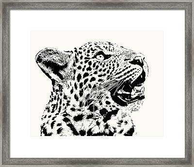 Inquisitive Young Leopard Looking Up Framed Print