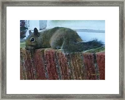 Framed Print featuring the photograph Inquisitor Visitor by Denise Fulmer