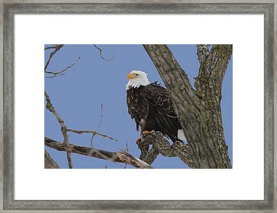 Inqusitive Look Framed Print by Dave Clark