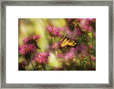 Insect - Butterfly - Golden Age  Framed Print