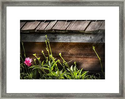 Insect - Spider - Charlottes Web Framed Print