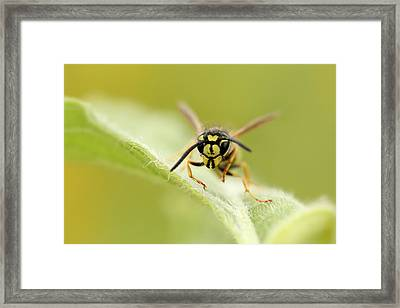 Insect 2 Framed Print by Heike Hultsch