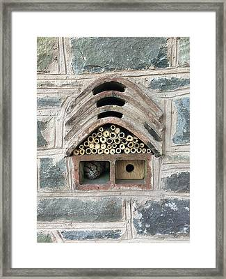 Insect And Bee House Framed Print