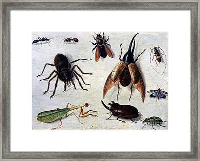 Insects, 1660 Framed Print