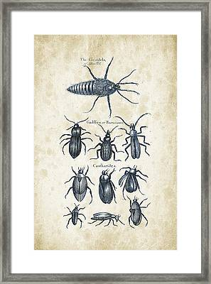 Insects - 1792 - 04 Framed Print by Aged Pixel