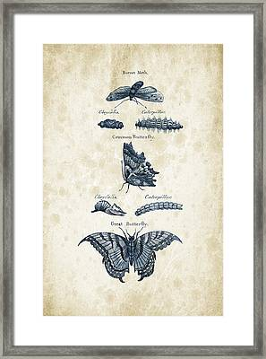 Insects - 1792 - 12 Framed Print by Aged Pixel